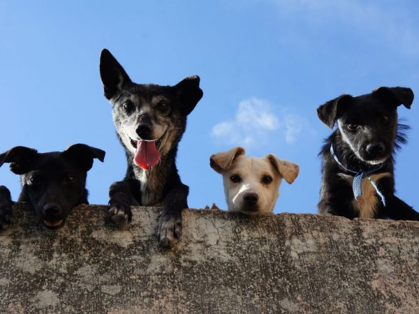 Dogs - Media Release Animal Cruelty